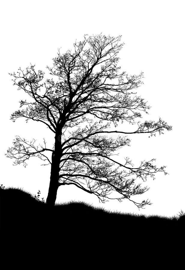 Odizolowywająca na biel drzewna sylwetka ilustracji