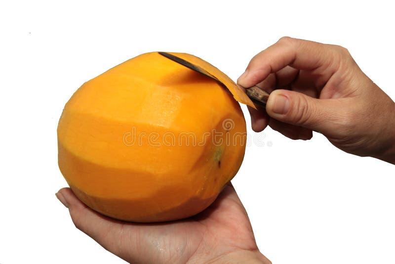 Odizolowywający lewa ręka i dobro Dojrzała pomarańczowej czerwieni R2E2 mango, Use, fotografia royalty free