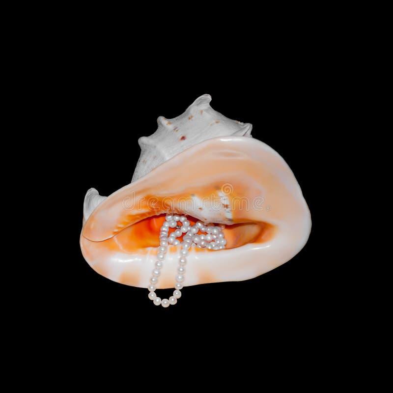 Odizolowywający na czarnym dekoracyjnym seashell z matką perła i kolia perły zdjęcie stock