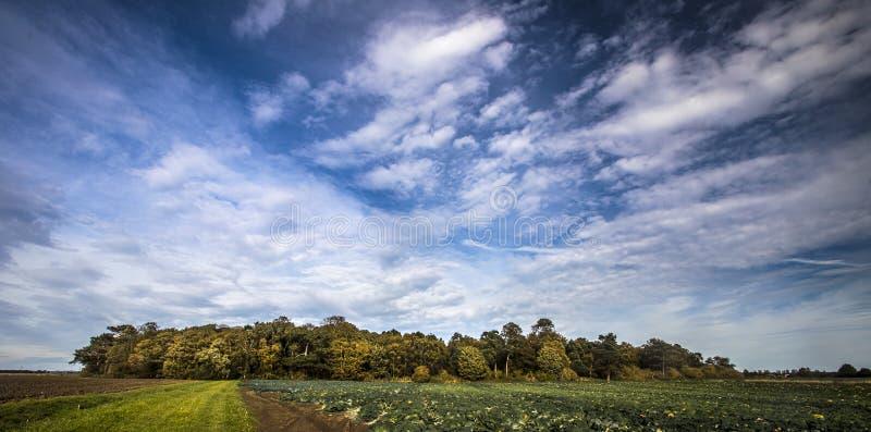 Odległy las pod pięknym lata niebem fotografia stock