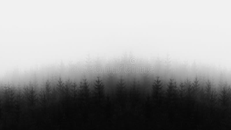Odległy las w czarny i biały obraz stock