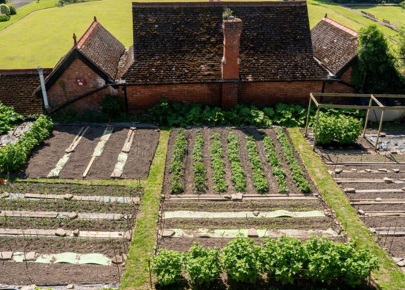 Odlingslottar och grönsaker i Shrewsbury, Shropshire royaltyfri foto