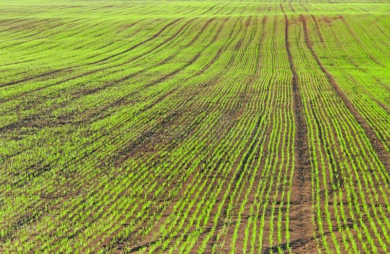 odlingsmark arkivbilder