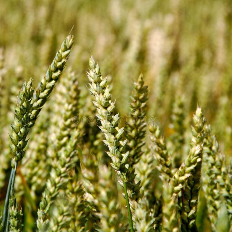 Odlingsmark. fotografering för bildbyråer