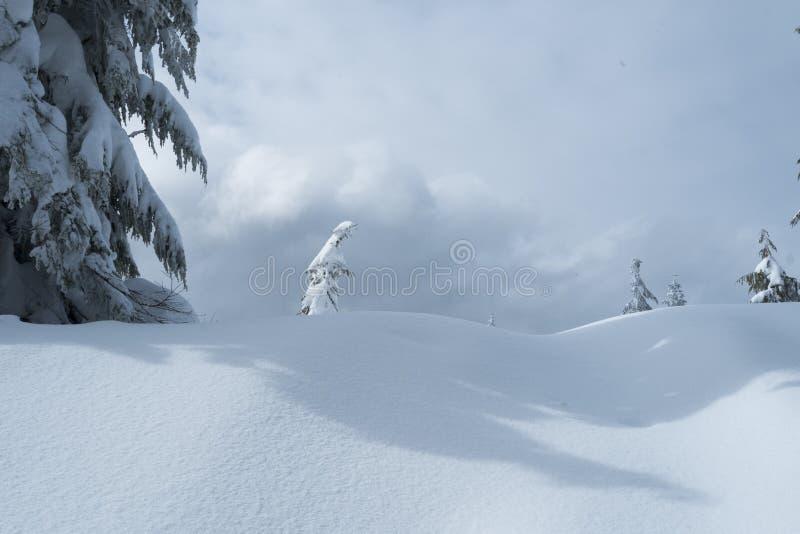 Odludny śnieg zakrywał drzewa w zimy scenie na góry Seymour ` s psa Halnej podwyżce zdjęcie stock