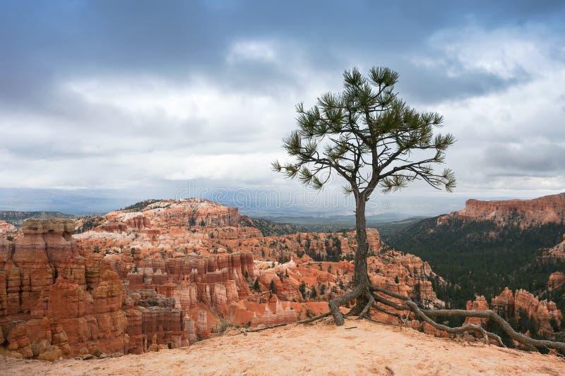Odludny drzewo w Bryka jaru parku narodowym, Utah fotografia stock
