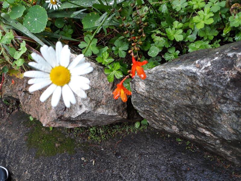 Odludny mały kwiat obraz royalty free