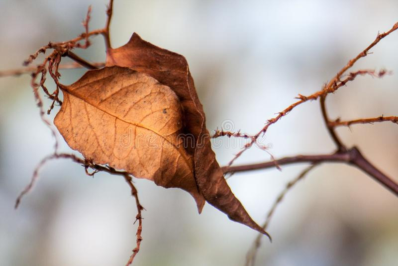 Odludny nieżywy liść zdjęcie stock
