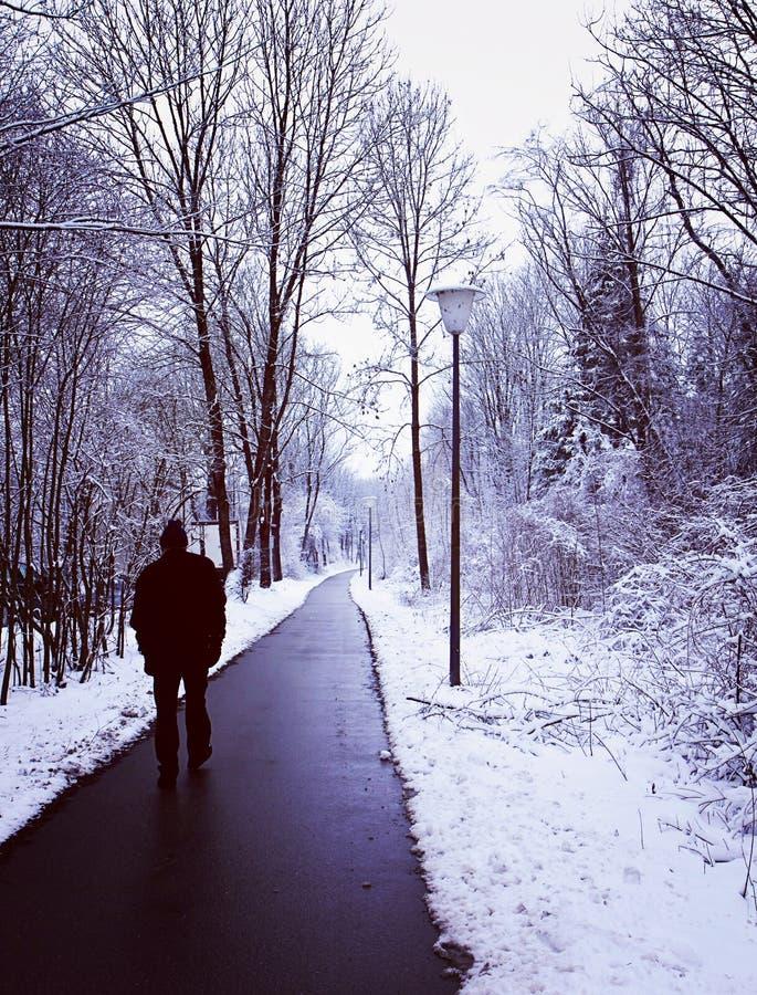 Odludny spacer w drewnie z zima śniegiem fotografia stock