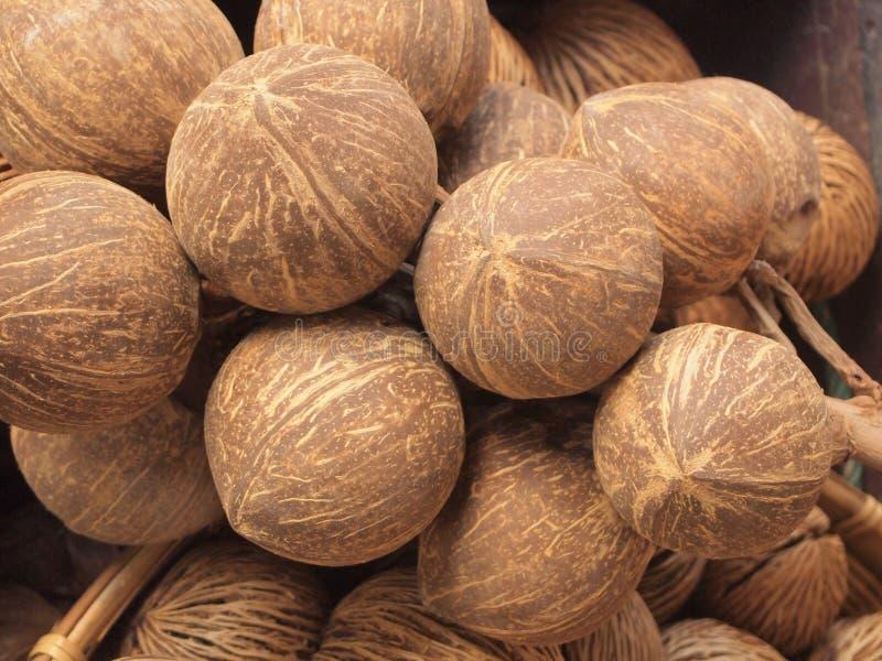 Odollam ou Pong-pong de Cerbera imagem de stock