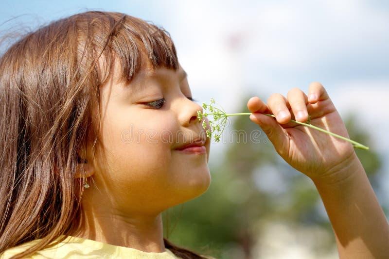 Odore piacevole immagine stock