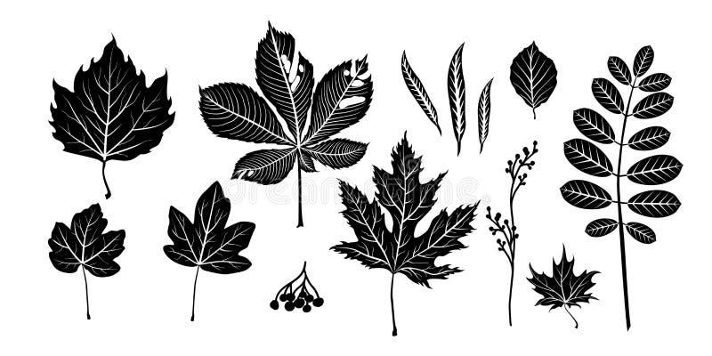 Odosobneni czerń liście ilustracja wektor
