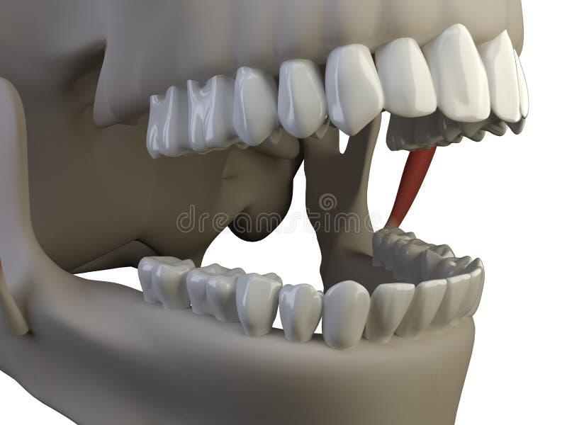 odosobneni zęby royalty ilustracja