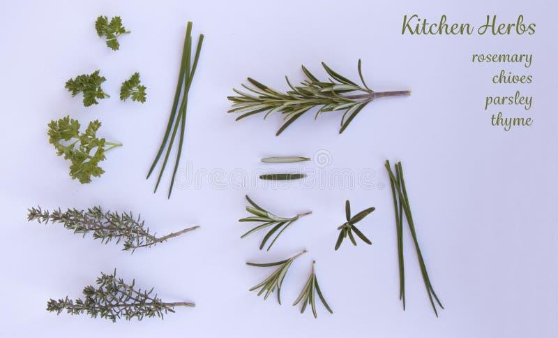 Odosobneni ziele na białym tle zdjęcia stock