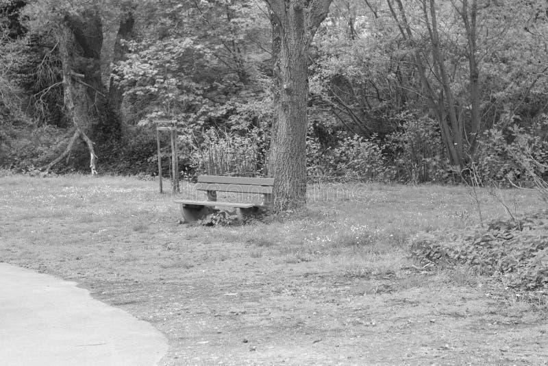 Odosobniona ławka w parku pod drzewem obraz royalty free