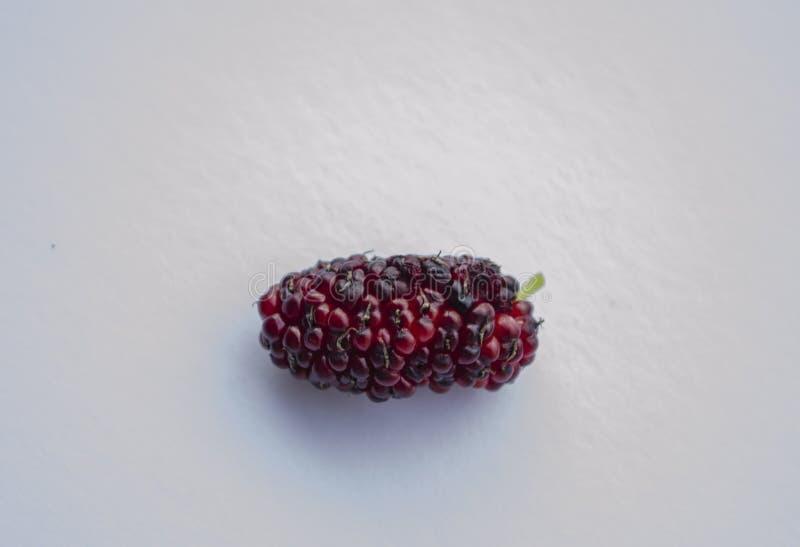 Odosobniona Czarna I Czerwona Dojrzała Morwowa owoc zdjęcie royalty free