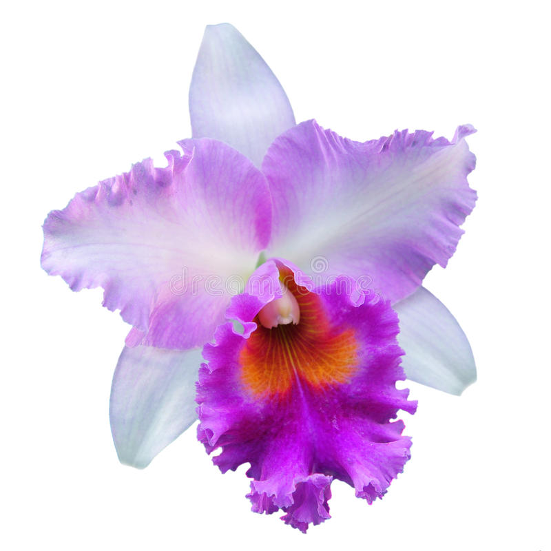 odosobniona orchidea fotografia royalty free
