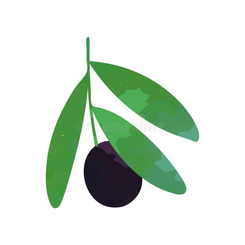 Odosobniona płaska wektorowa ilustracja zieleni gałąź z czarną oliwką i liśćmi Organicznie jarski karmowy pojęcie greeley ilustracji