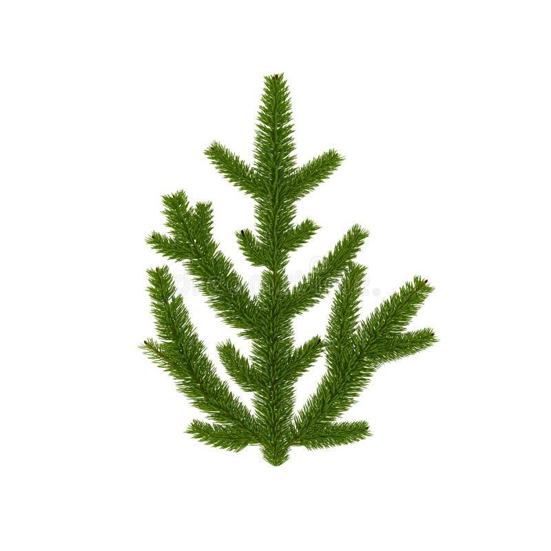 Odosobniona zieleni gałąź dla Bożenarodzeniowej dekoraci royalty ilustracja