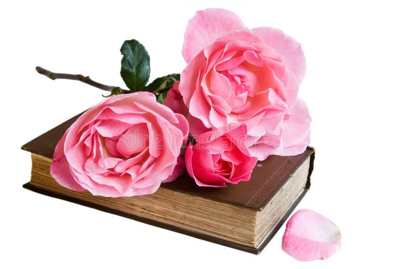 odosobnione książek róże fotografia royalty free
