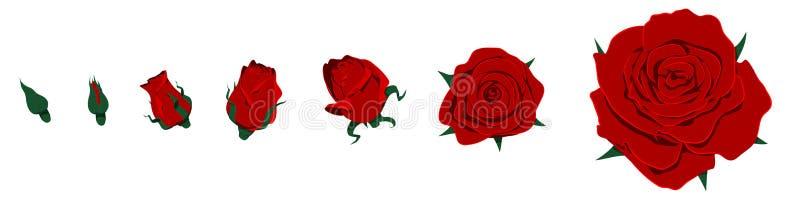 odosobnione róże royalty ilustracja