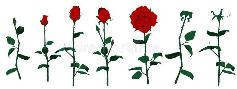 odosobnione róże ilustracja wektor