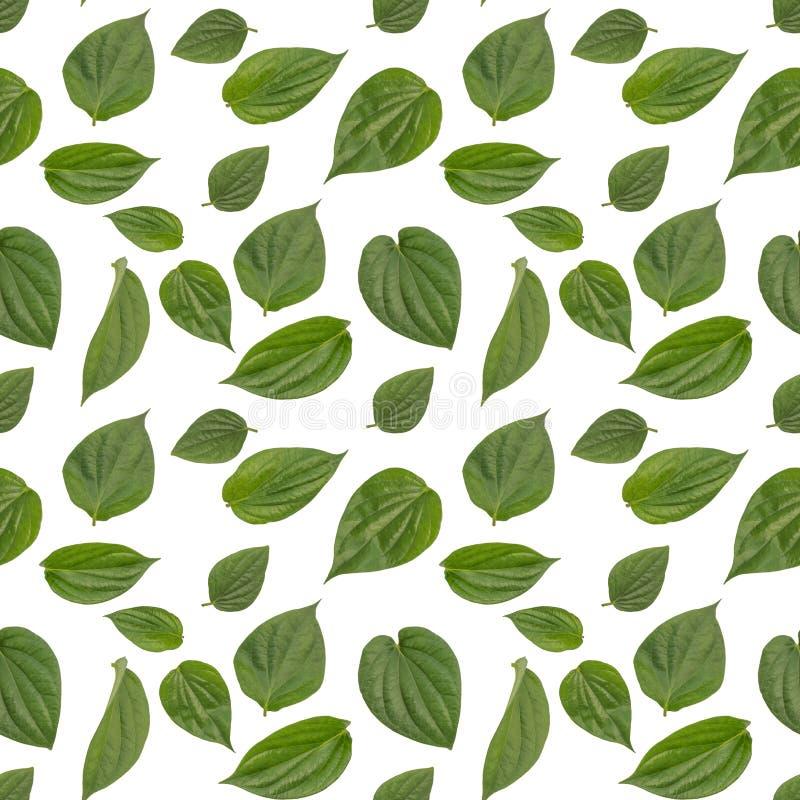 Odosobnionego betlu liścia bezszwowy wzór w białym tle obrazy royalty free