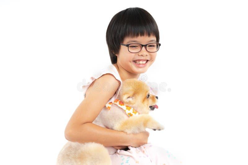Odosobnionego portreta ma?ej dziewczynki mienia pomorzanki Azjatycki pies na bia?ym tle ostro?nie Studio strzelaj?cy dziewczyna i zdjęcie royalty free