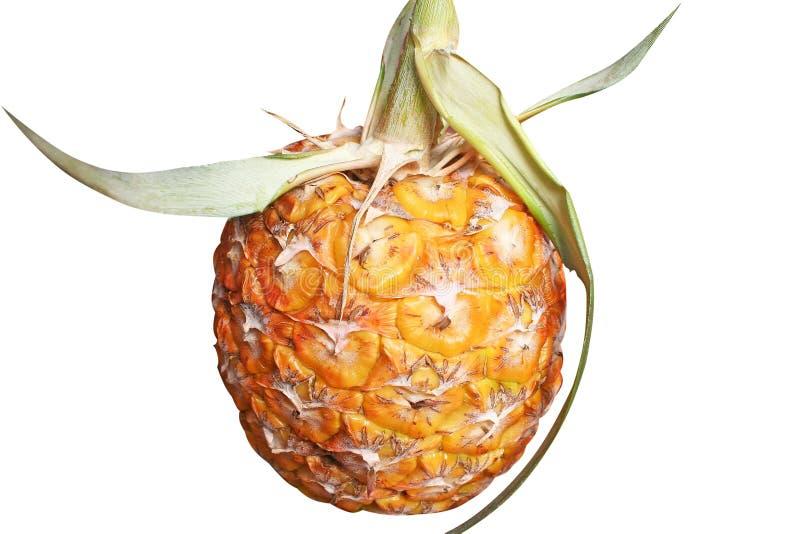 Odosobniony świeży ananas, Asia zdjęcia royalty free