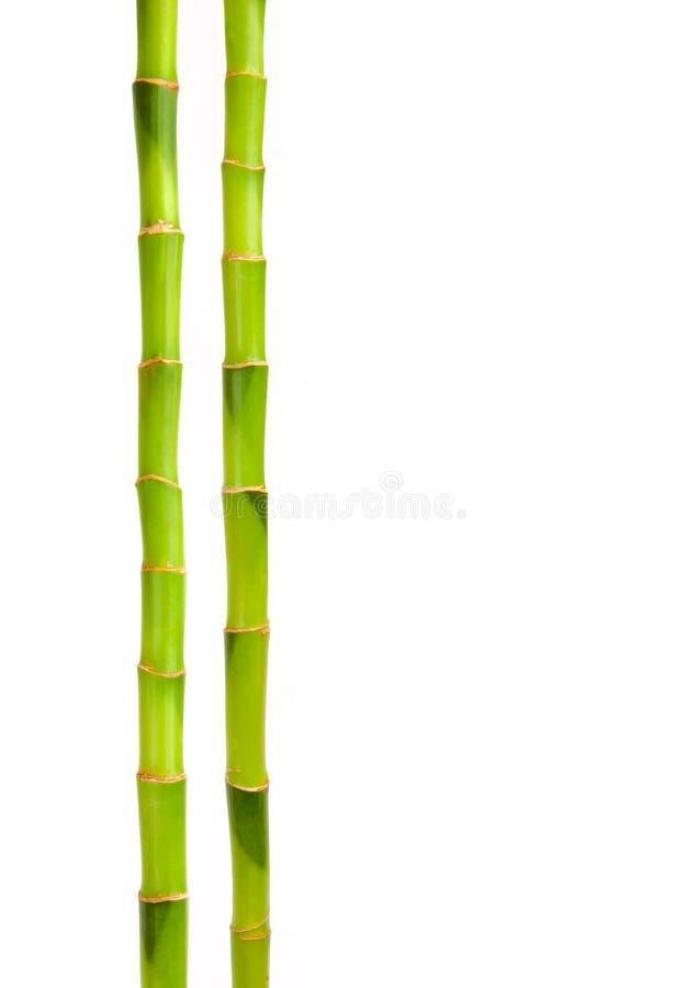 odosobniony bambusa biel obraz stock