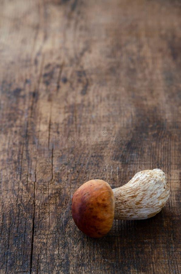 Odosobniony biel pieczarki borowik na ciemnego drewnianego t?a surowym jedzeniu zdjęcia royalty free