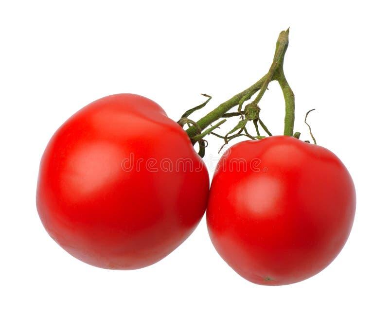 odosobniony czerwony tomatto obraz stock