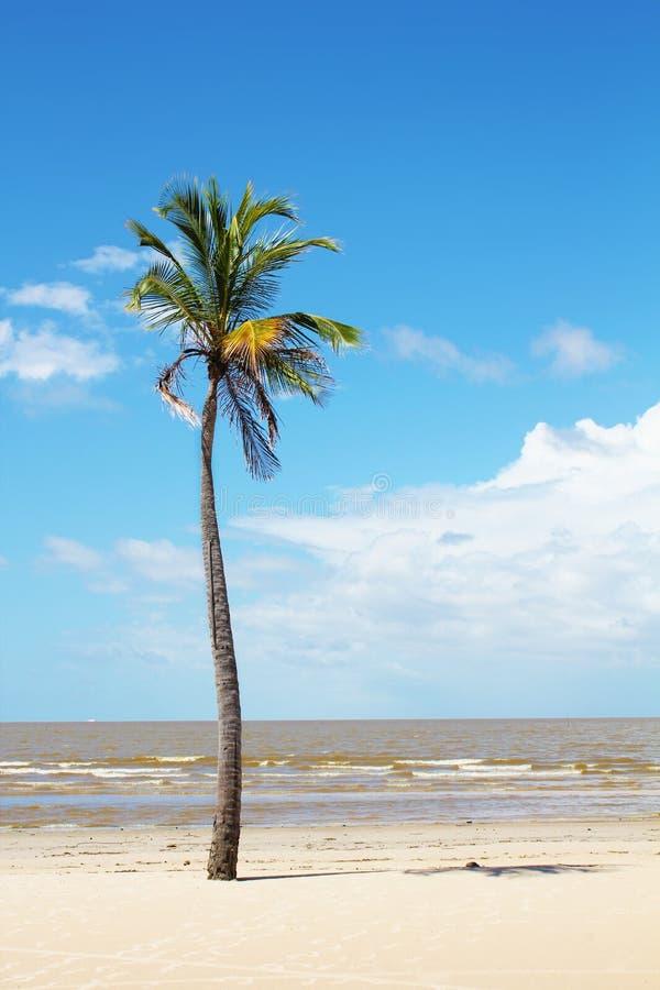 Odosobniony drzewko palmowe obraz stock