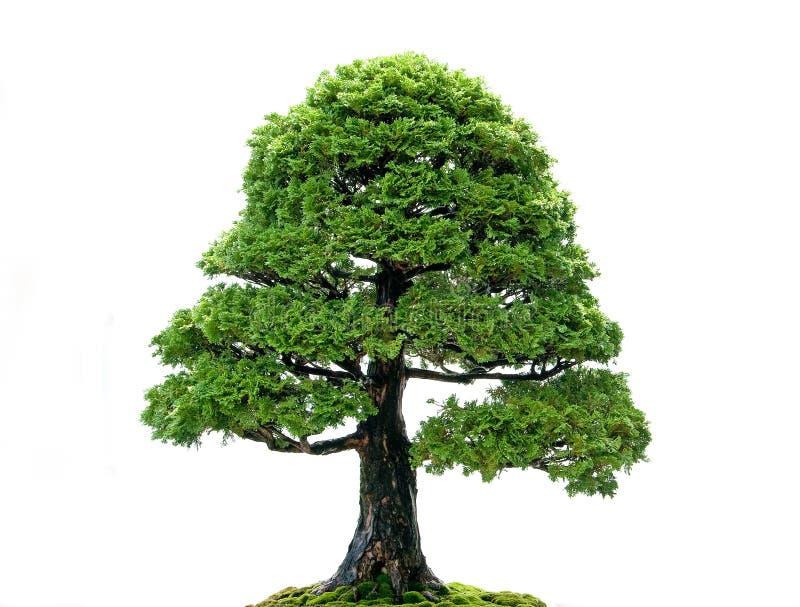 odosobniony drzewo fotografia stock