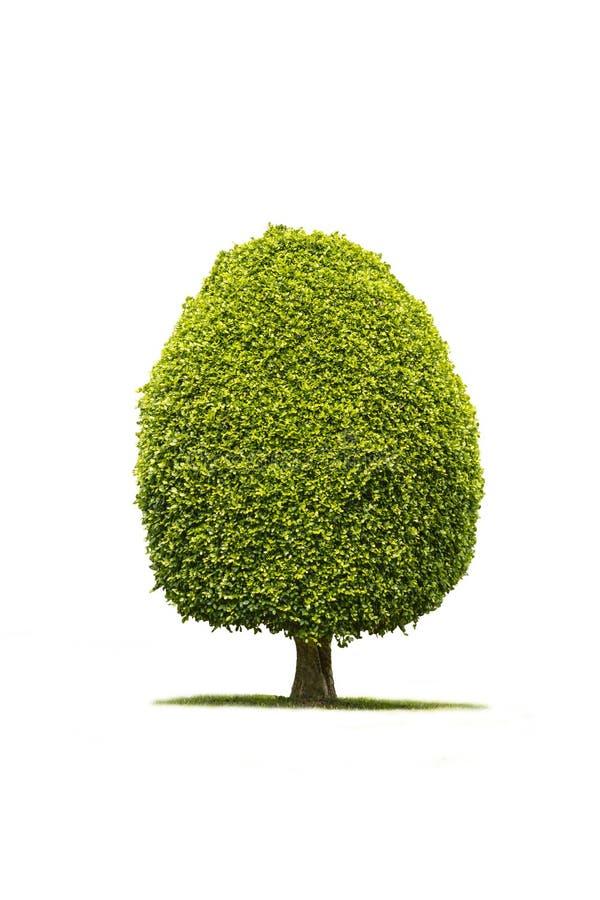 Odosobniony drzewo z ścinek ścieżką fotografia stock