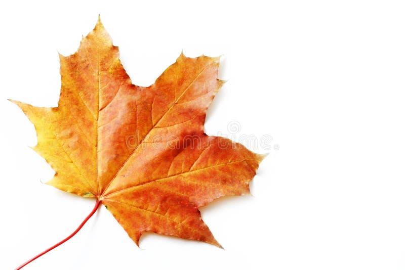 odosobniony jesień liść zdjęcie stock