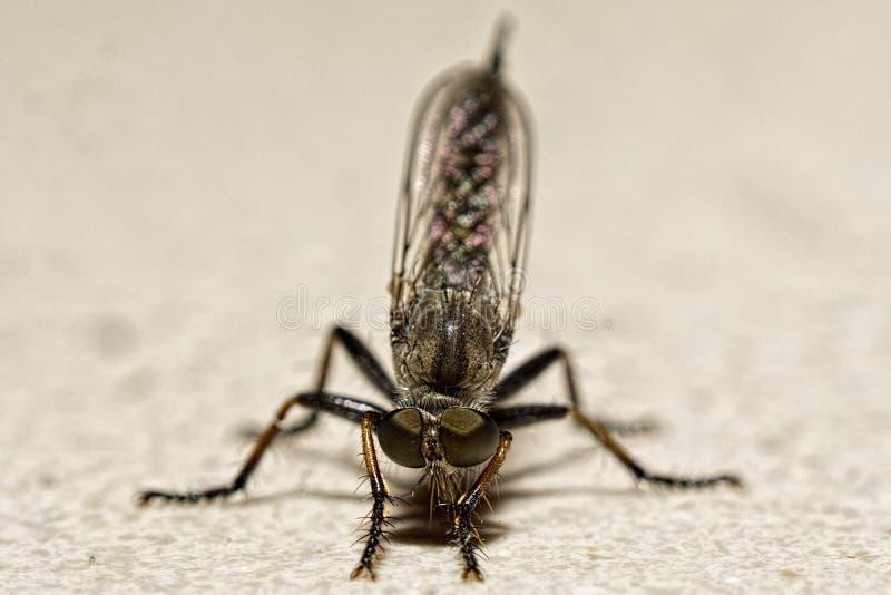 Odosobniony komara zbliżenia warstwy tło obrazy royalty free