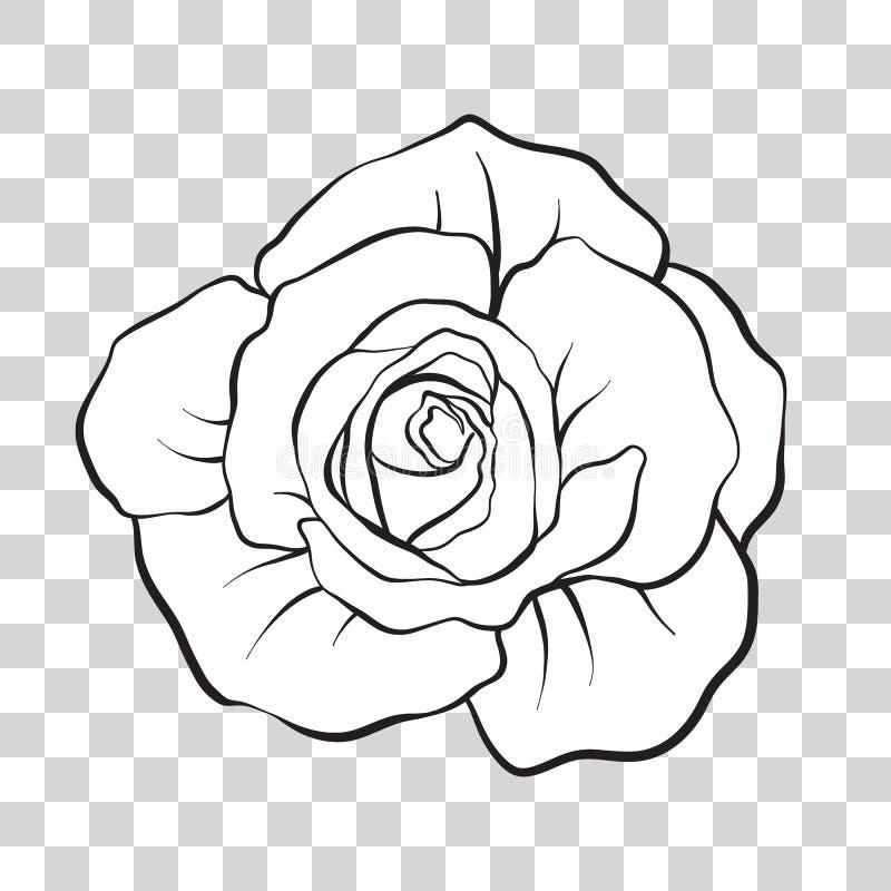 Odosobniony kontur róży kwiat projekta ilustraci zapasu use wektor twój royalty ilustracja