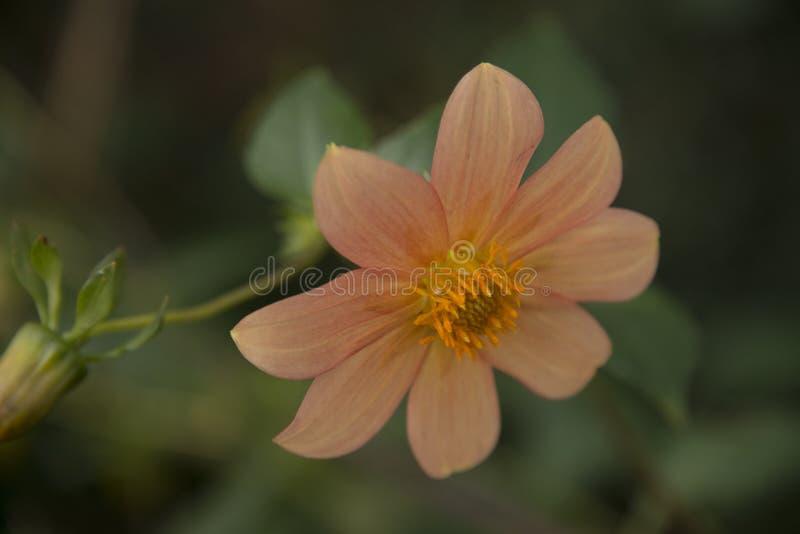 odosobniony kwiatu biel fotografia stock