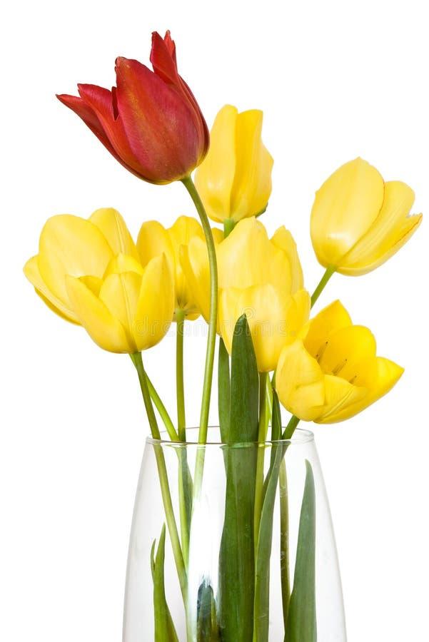 odosobniony kwiatu tulipan fotografia royalty free