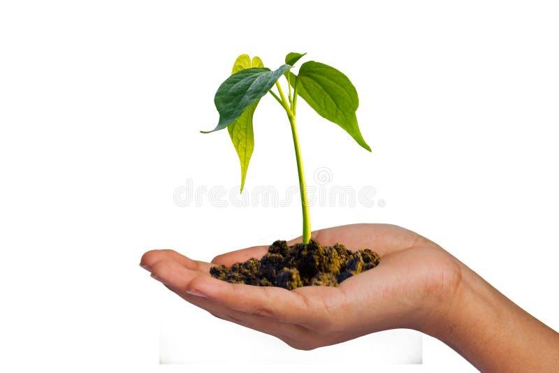 Odosobniony mały drzewo na ręce fotografia stock