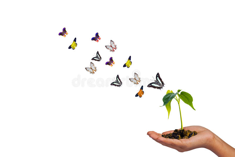 Odosobniony mały drzewo na ręce i motylach fotografia stock