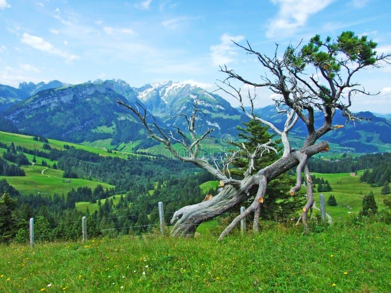 Odosobniony malowniczy górzysty drzewo obrazy stock