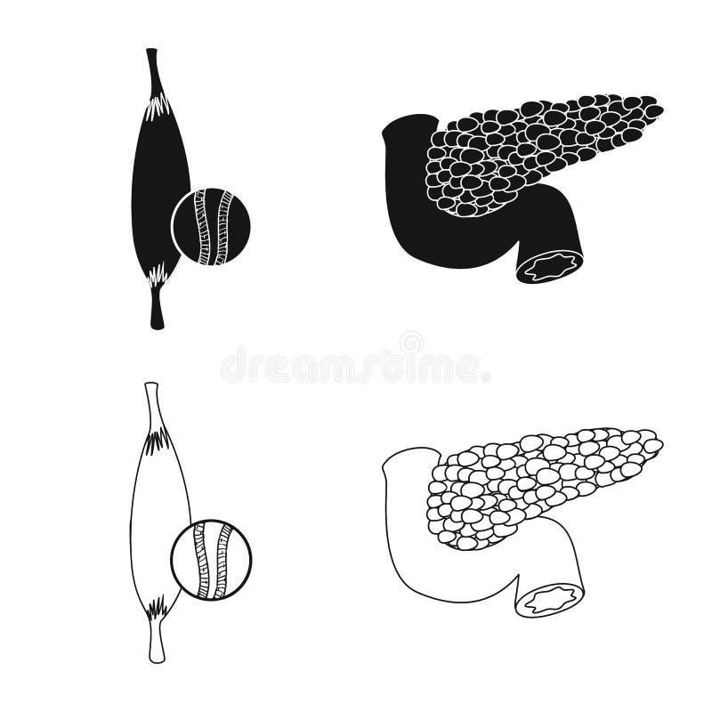 Odosobniony przedmiot ciała i istoty ludzkiej ikona Set ciało i medyczna akcyjna wektorowa ilustracja ilustracji