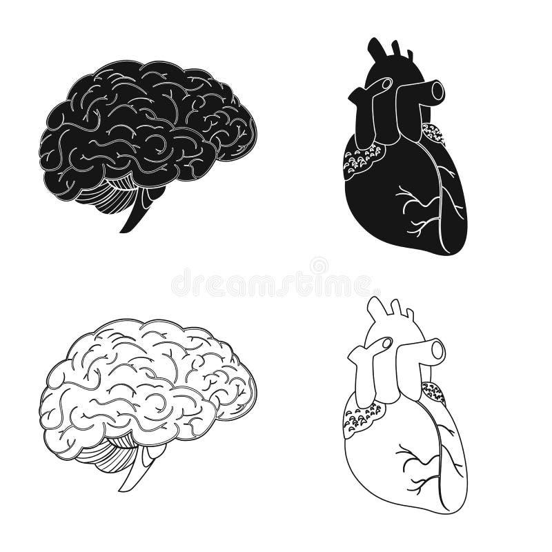 Odosobniony przedmiot ciała i istoty ludzkiej symbol Kolekcja ciało i medyczna wektorowa ikona dla zapasu ilustracji