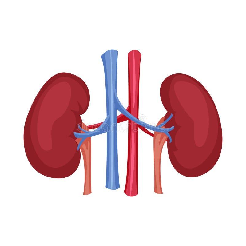 Odosobniony przedmiot ciała i istoty ludzkiej symbol Set ciało i medyczna akcyjna wektorowa ilustracja ilustracji