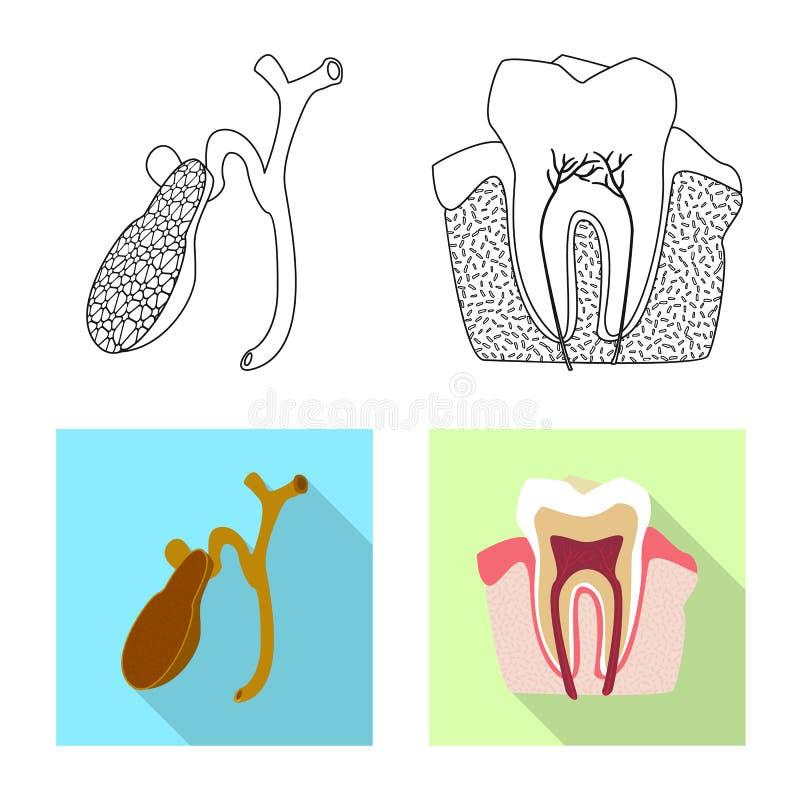 Odosobniony przedmiot ciała i istoty ludzkiej znak Set ciało i medyczna akcyjna wektorowa ilustracja ilustracja wektor