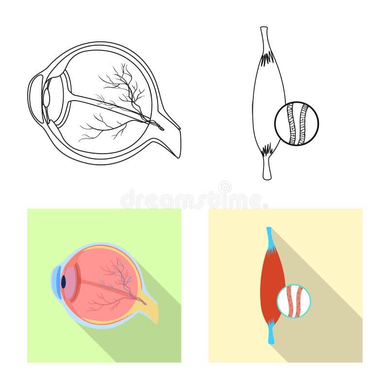 Odosobniony przedmiot ciała i istoty ludzkiej znak Set ciało i medyczna wektorowa ikona dla zapasu royalty ilustracja