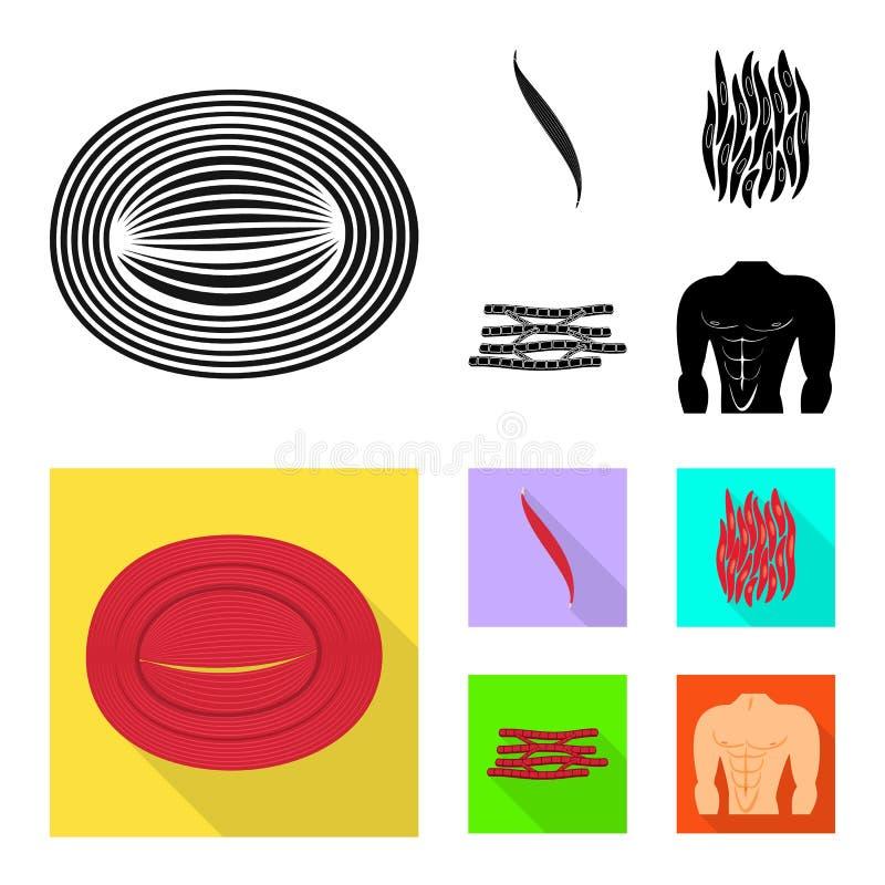 Odosobniony przedmiot włókno i mięśniowy symbol Kolekcja włókna i ciała akcyjny symbol dla sieci ilustracja wektor