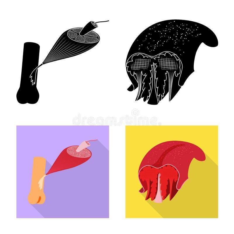 Odosobniony przedmiot włókno i mięśniowy symbol Set włókna i ciała akcyjny symbol dla sieci royalty ilustracja